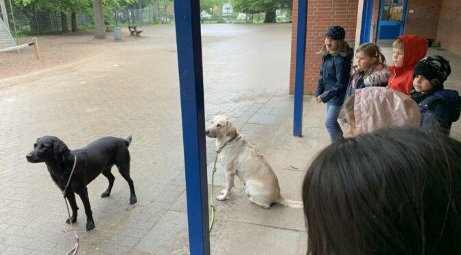 Besuch vom ASB-Rettungshundeteam